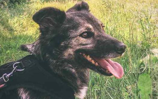 Ljuba adopté en Suisse