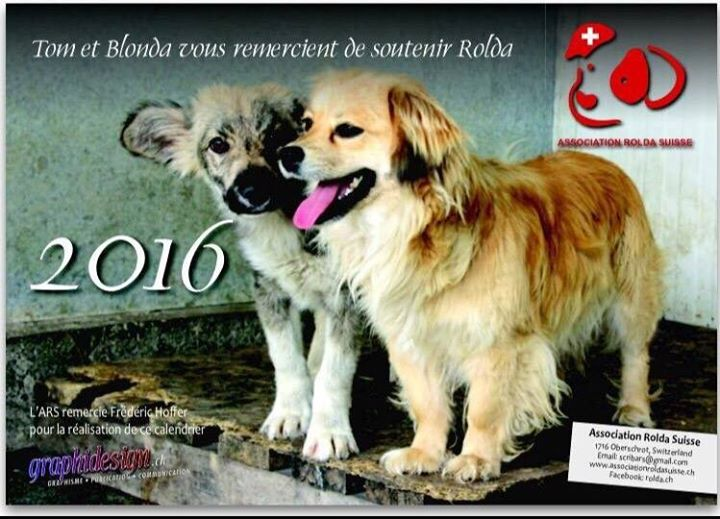 Le calendrier ROLDA SUISSE 2015