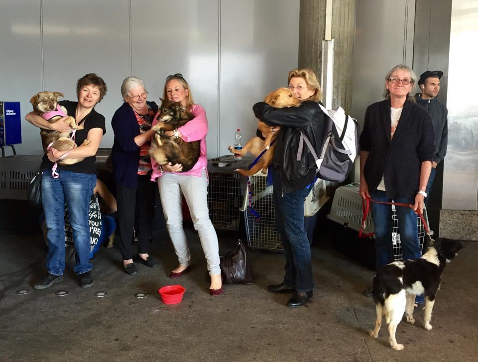 8 chiens adoptés Mai 2015